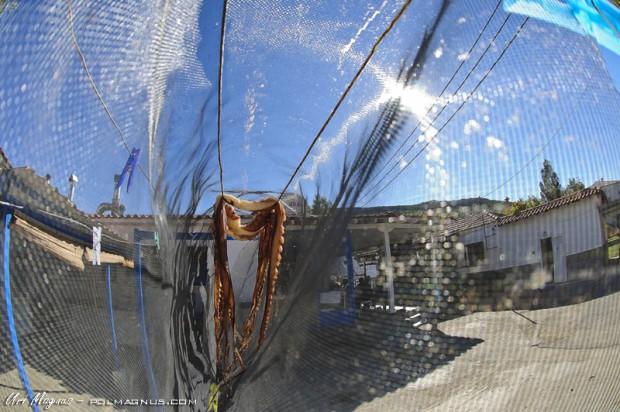 תמנונים מיובשים בכניסה לטברנה ב porto koufos